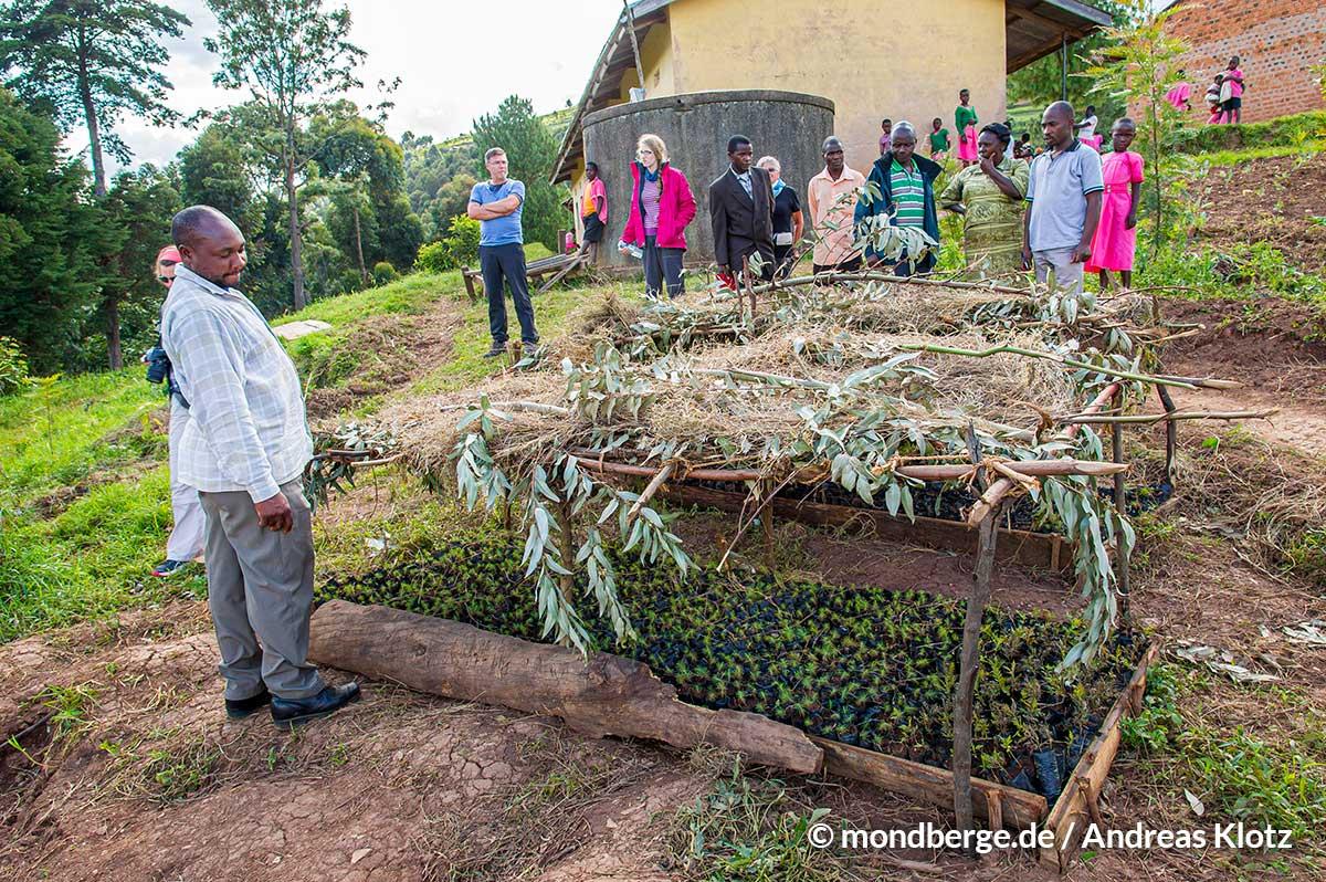 MondbergeProjekt_Uganda_Baumsetzlinge